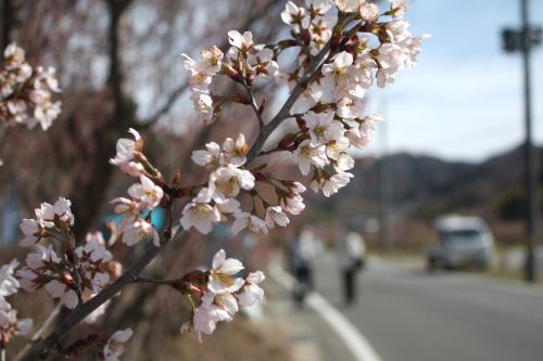 福島県福島市 花見山公園の情報 2019年3月26日 IMG_5674