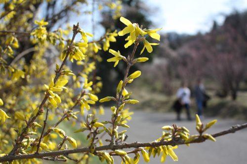 福島県福島市 花見山公園の情報 2019年3月26日 IMG_5683
