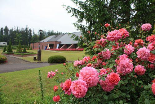 福島県福島市 アサヒビール園四季の里店 2019年6月7日 よらんしょ!花のふくしま