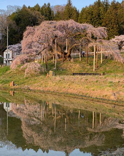 2019年4月20日中島の地蔵桜1。二本松市針道