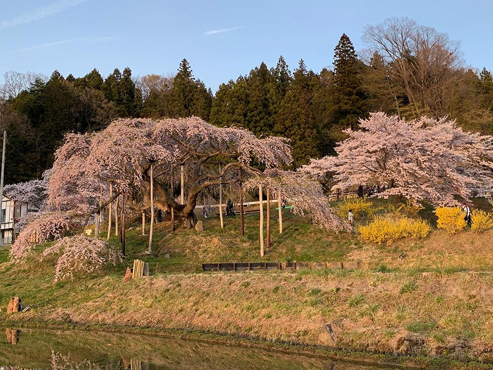 2019年4月20日中島の地蔵桜2。二本松市針道