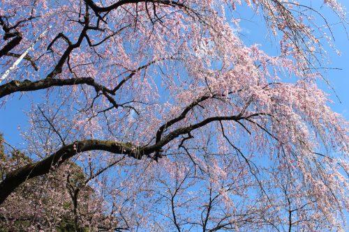 福島県福島市 中野不動尊 2019年4月9日 IMG_0719