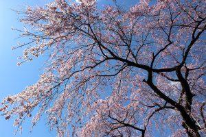 福島県福島市 中野不動尊 2019年4月9日 IMG_0721