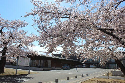 福島県福島市 花桃の公園(飯坂学習センター)2019年4月9日 IMG_0722