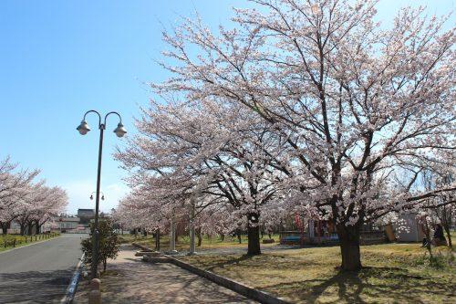 福島県福島市 乙和公園 2019年4月9日 IMG_0729