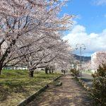 福島県福島市 乙和公園 2019年4月9日 IMG_0730