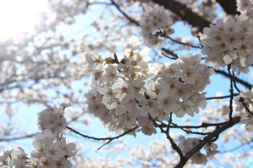 福島県福島市 乙和公園 2019年4月9日 IMG_0731