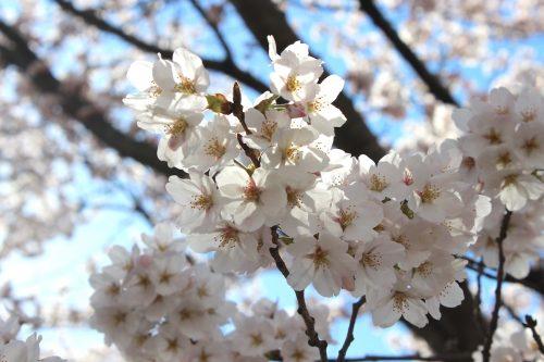 福島県福島市 乙和公園 2019年4月9日 IMG_0732