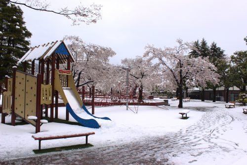 福島県福島市 新浜公園 2019年4月11日 IMG_0809