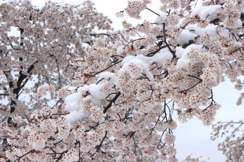 福島県福島市 新浜公園 2019年4月11日 IMG_0810