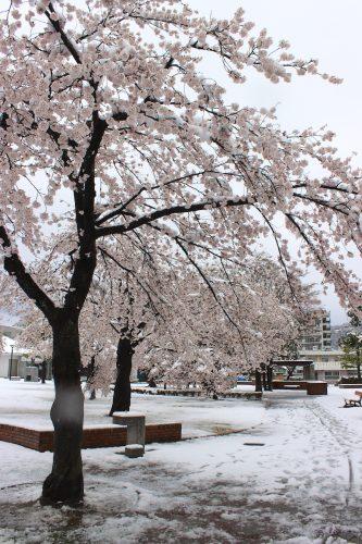 福島県福島市 新浜公園 2019年4月11日 IMG_0813
