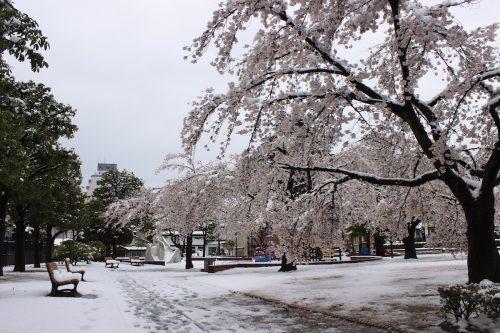 福島県福島市 新浜公園 2019年4月11日 IMG_0816