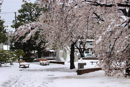 福島県福島市 新浜公園 2019年4月11日 IMG_0817