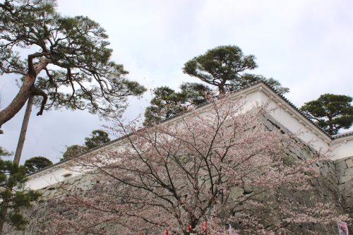 福島県二本松市 霞ヶ城公園 2019年4月12日 IMG_0820