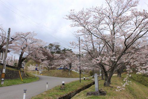 福島県二本松市 霞ヶ城公園 2019年4月12日 IMG_0822