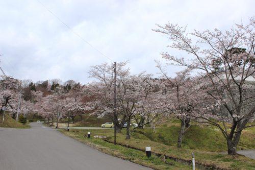 福島県二本松市 霞ヶ城公園 2019年4月12日 IMG_0823
