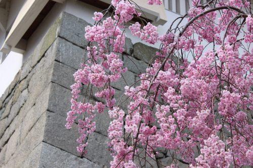 福島県二本松市 霞ヶ城公園 2019年4月19日 IMG_0856