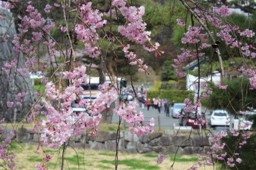 福島県二本松市 霞ヶ城公園 2019年4月19日 IMG_0858
