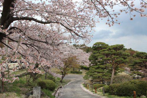 福島県二本松市 霞ヶ城公園 2019年4月19日 IMG_0861