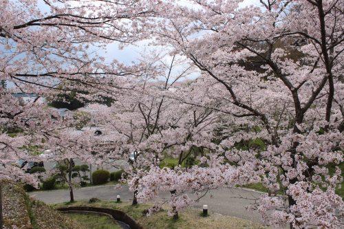福島県二本松市 霞ヶ城公園 2019年4月19日 IMG_0862