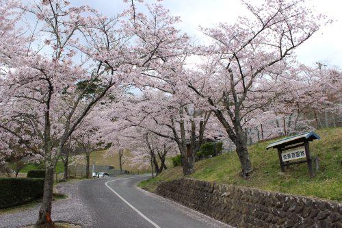 福島県二本松市 霞ヶ城公園 2019年4月19日 IMG_0863