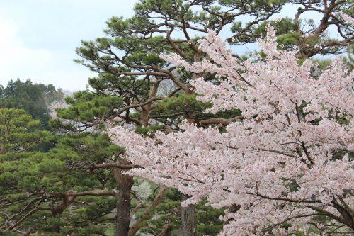 福島県二本松市 霞ヶ城公園 2019年4月19日 IMG_0864