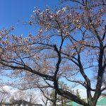 福島県福島市 新浜公園 2019年4月3日 IMG_3630