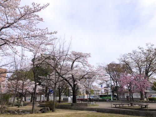 福島県福島市 県庁前公園 2019年4月8日 IMG_4206