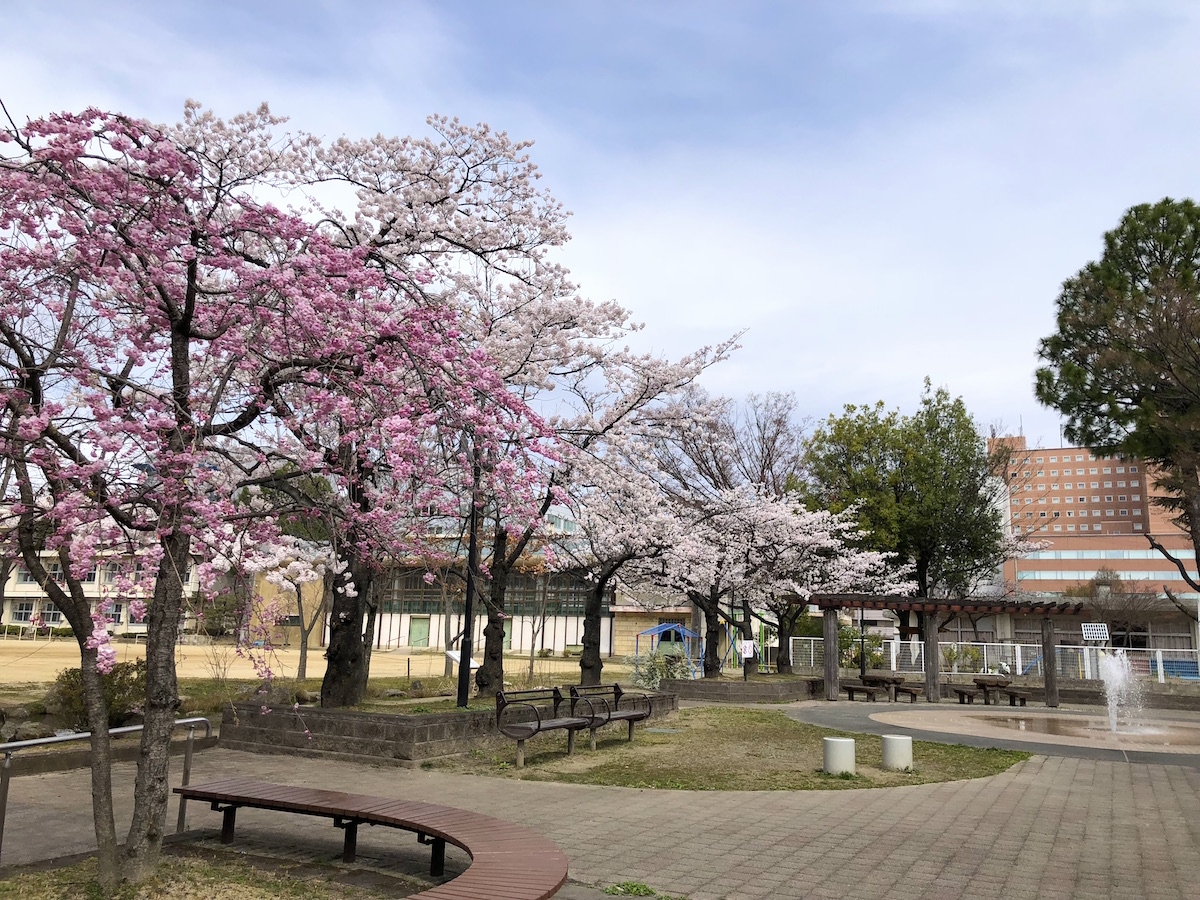 福島県福島市 県庁前公園 2019年4月8日 IMG_4207