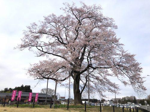 福島県二本松市 道の駅 安達・安達駅 2019年4月8日 IMG_4209
