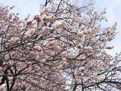 福島県二本松市 道の駅 安達・安達駅 2019年4月8日 IMG_4211