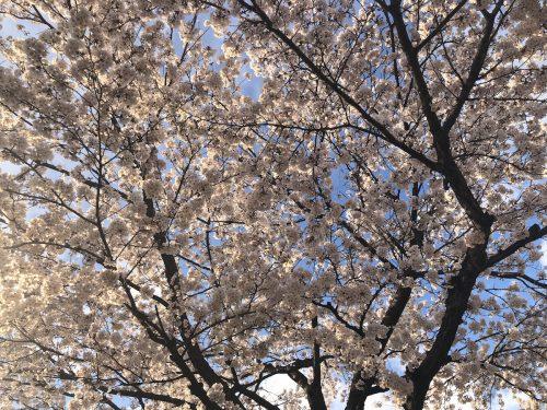 福島中央郵便局 2019年4月10日 IMG_4225