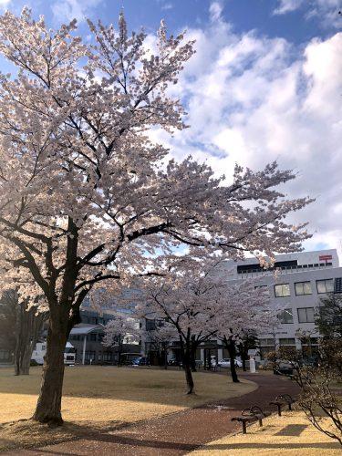 福島中央郵便局 2019年4月10日 IMG_4226