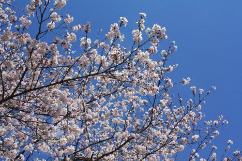 福島県福島市 あづま総合運動公園 2019年4月15日 IMG_5718