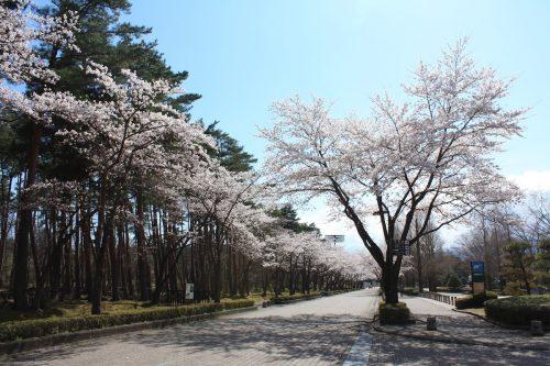 福島県福島市 あづま総合運動公園 2019年4月15日 IMG_5719