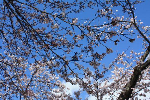福島県福島市 あづま総合運動公園 2019年4月15日 IMG_5721