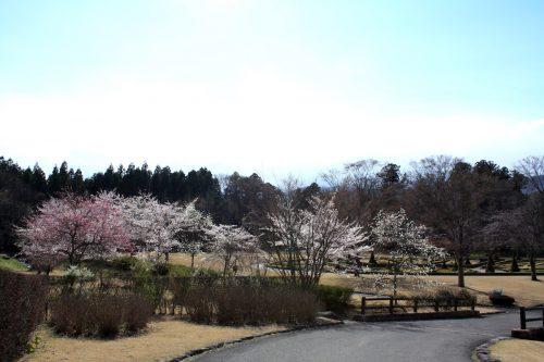 福島県福島市 四季の里 2019年4月15日 IMG_5731