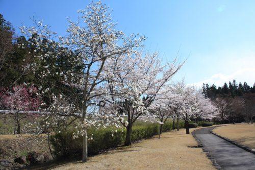 福島県福島市 四季の里 2019年4月15日 IMG_5732
