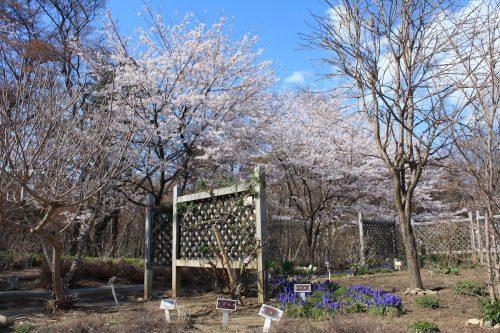 福島県福島市 四季の里 2019年4月15日 IMG_5734