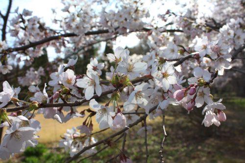 福島県福島市 四季の里 2019年4月15日 IMG_5735