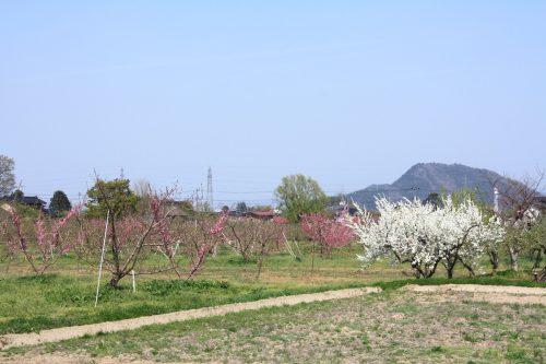 福島県福島市 フルーツライン 2019年4月23日 IMG_5753