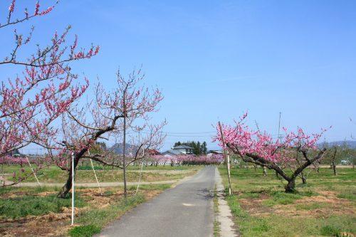 福島県福島市 フルーツライン 2019年4月23日 IMG_5754