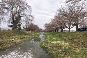 2019年4月24日猪苗代町川桁、観音寺の桜_3654