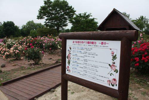 2019年6月7日 よらんしょ!花のふくしま。あづま総合運動公園 あづま香りのバラ園_6036