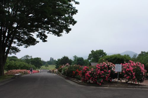 2019年6月7日 よらんしょ!花のふくしま。あづま総合運動公園 あづま香りのバラ園_6033