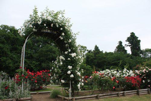福島県福島市 四季の里 2019年6月7日 よらんしょ!花のふくしま_6028
